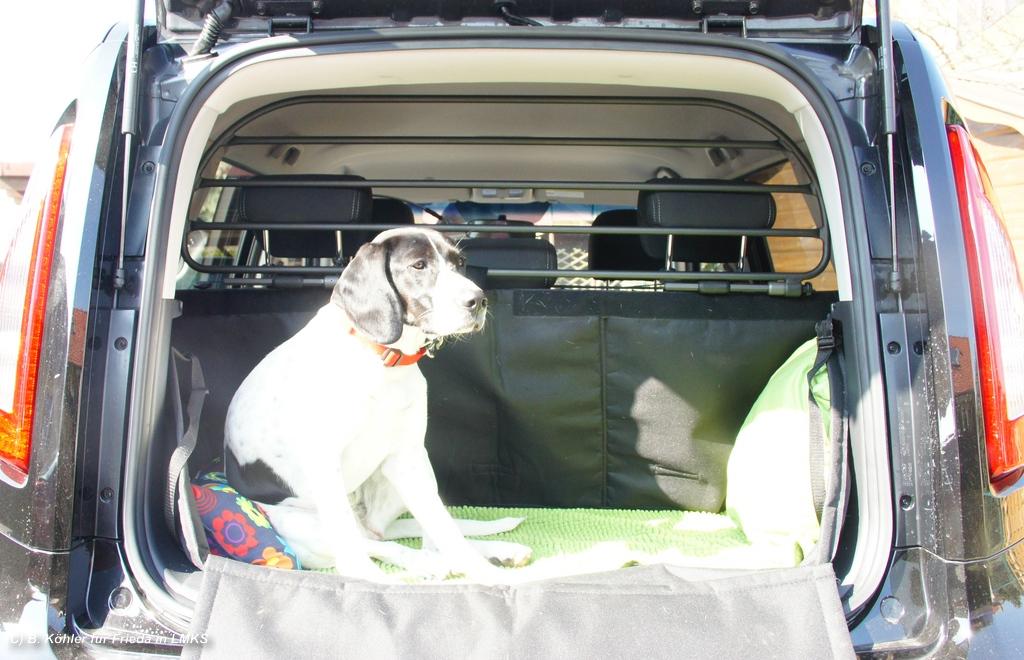 lösung hundetransport mini